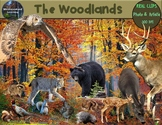 Woodlands Forest Animals Clip Art Habitat Biome Real Clips