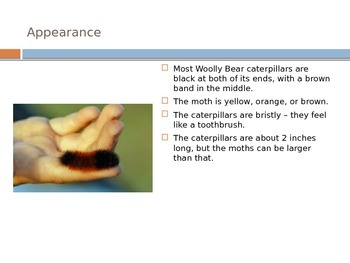 Woolly Bear PowerPoint