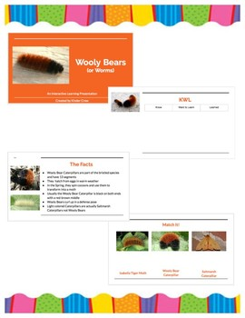 Wooly Bears, An Interactive Learning Presentation
