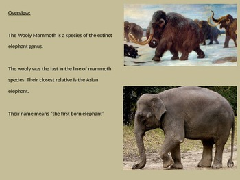 Wooly Mammoth Power Point - History Facts Information Pictures Extinct