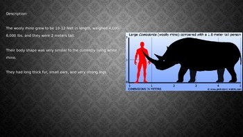 Wooly Rhino - Power Point - Full History Facts Information Pictures