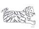 Word Animal - Tiger