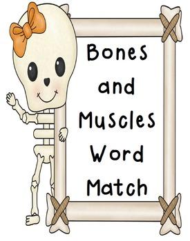 Word Match Worksheets-Human Body (Skeletal System, Muscular System, Skin)