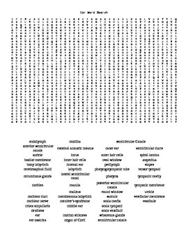 Word Search Covering Hearing and the Ear for Anatomy