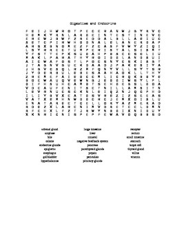 Word Search Covering The Digestive and Endocrine Systems For Biology II