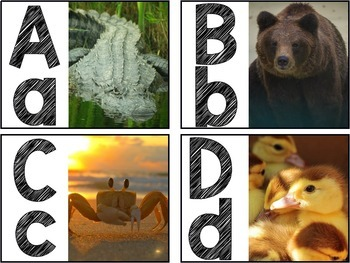 Word Wall & Alphabet Resources: Photo Edition