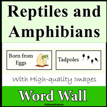 Word Wall Bundle