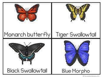 Word Wall Cards: Butterflies and Life Cycle