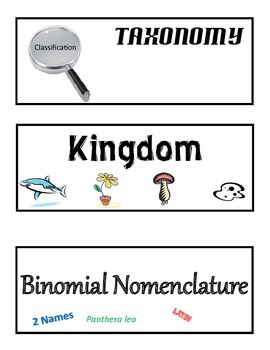 Word Wall: Classification