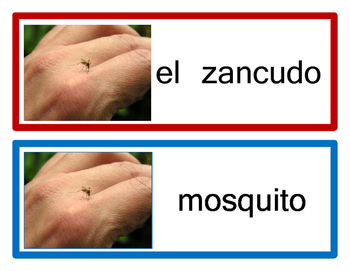 Word Wall Example - Spanish & English