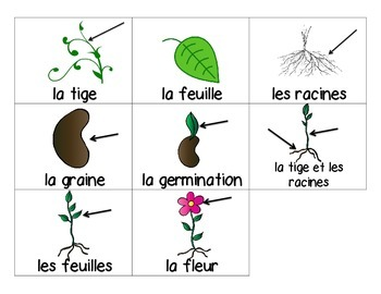 Word Wall- Plants French Immersion