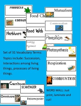 Word Wall: Processes, Interactions, Cycles, and More!