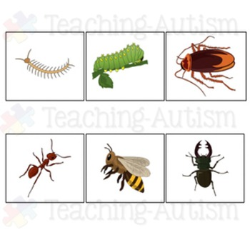 Word Picture Matching: Mini Beasts / Insects