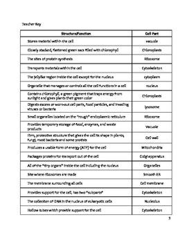 33 Biology Cell Organelles Worksheet   Worksheet Project List
