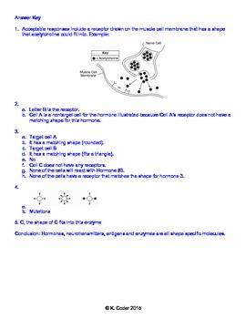 Worksheet - Cellular Communication