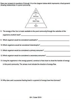 Worksheet - Energy Pyramid - Constructed Response *EDITABLE* | TpT