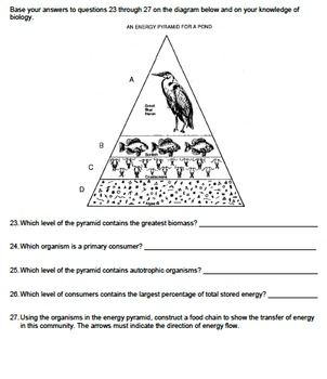 Worksheet - Energy Pyramid - Constructed Response *EDITABLE*