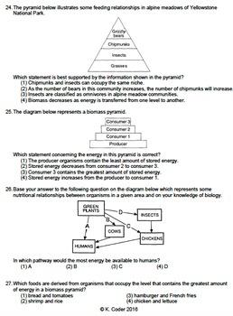 Worksheet - Energy Pyramid - Multiple Choice *EDITABLE*