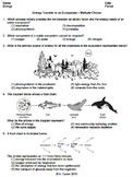 Worksheet - Energy Transfer in an Ecosystem MC *EDITABLE*
