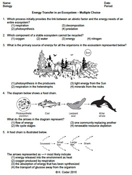 Worksheet - Energy Transfer in an Ecosystem MC *EDITABLE* | TpT