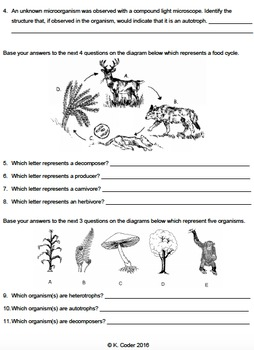 Worksheet - Feeding Relationships (Constructed Response) *EDITABLE*