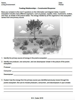 Worksheet - Feeding Relationships (Constructed Response) *EDITABLE*