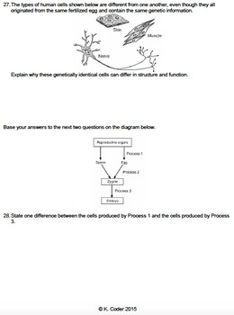 Worksheet - Fertilization and Development *EDITABLE*