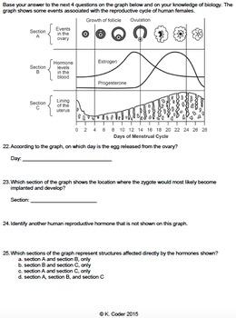 Worksheet - Menstrual Cycle *EDITABLE*