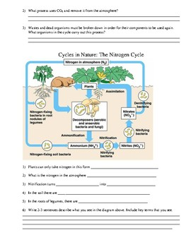 Worksheet Nutrient Cycles by ChemistryCat   Teachers Pay ...