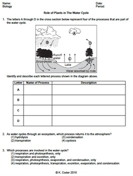 Worksheet - Role of Plants in the Water Cycle *EDITABLE*