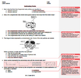 Worksheet - Sedimentary Rocks #1 *EDITABLE* (WITH ANSWERS EXPLAINED)