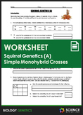 Worksheet - Squirrel Genetics With Monohybrid Crosses (Part A)