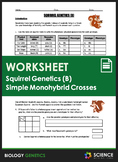 Worksheet - Squirrel Genetics With Monohybrid Crosses (Part B)