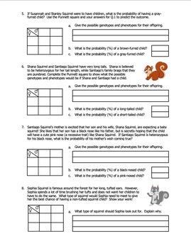 Worksheet Squirrel Genetics With Monohybrid Crosses Part B Tpt