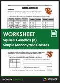 Worksheet - Squirrel Genetics With Monohybrid Crosses (Part B)