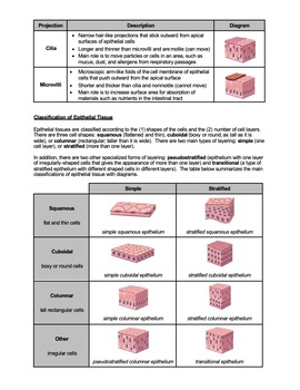 Worksheet - What is Epithelial Tissue (HS-LS1) by Science ...
