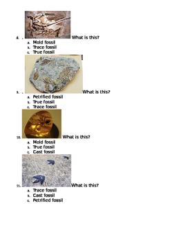 Worksheet on types of fossils