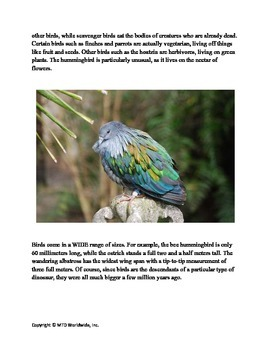 Worksheets About Birds Package