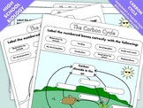 High School Biology: Worksheets and Posters on the Carbon Cycle