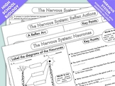 High School Biology: Nervous System Worksheet Pack
