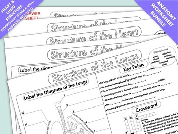 Worksheets on the structure and function of the heart and lungs tpt worksheets on the structure and function of the heart and lungs ccuart Gallery