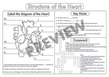 High School Biology: Heart and Lungs Worksheet Pack | TpT