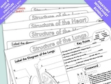 Worksheets on the Structure and Function of the Heart and Lungs