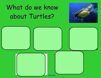 World Turtle Day - Tortoises/Turtles