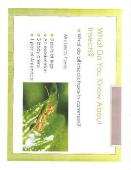World of Insects Packet- Bundled Lesson Plans