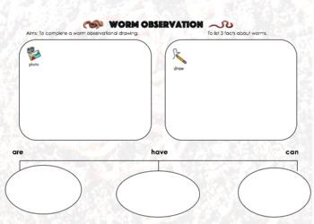 Worm Graphic Organiser