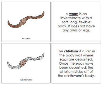 Worm Nomenclature Book