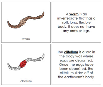 Worm Nomenclature Book (Red)