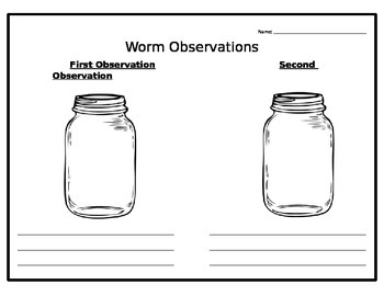 Worm Observations