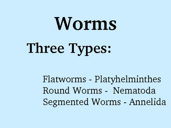 Worm Phylums Powerpoint (Flat, Round, and Segmented Worms)